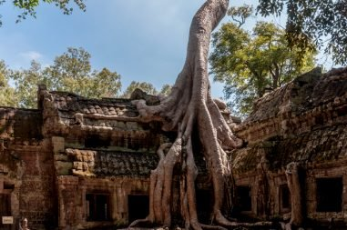 Angkor_SiemReap_Cambodia_Tha-Prom-Temple