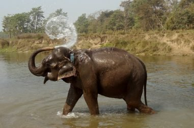 chitwan-national-park-elephant